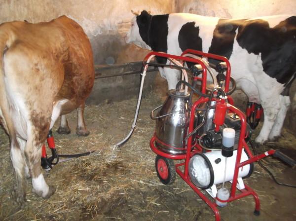 POSUŠJE: Održano predavanje o prinosu i higijeni mlijeka