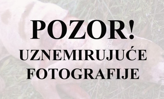FOTO: Vukovi opet haraju Grudama