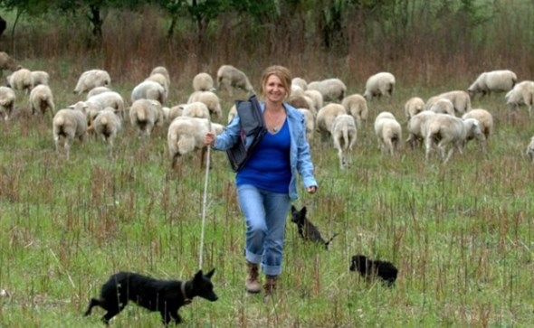 UŽIVANJE U PRIRODI: Magistar prava uživa u uzgoju 300 ovaca: Želim biti svoj gazda!