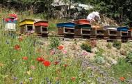 Bh pčelari zadovoljni odličnom kvalitetom ali i upozoravaju na loš uvozni med