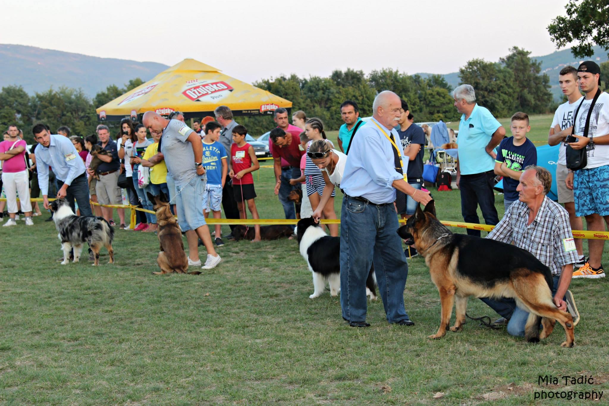 FOTO: Na Međunarodnoj izložbi pasa u Posušju pobjedu odnio pas iz Šujice