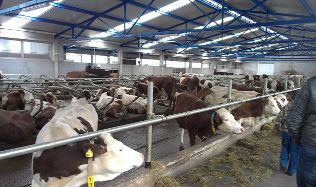 Posuški BGL ruši rekorde u proizvodnji mlijeka