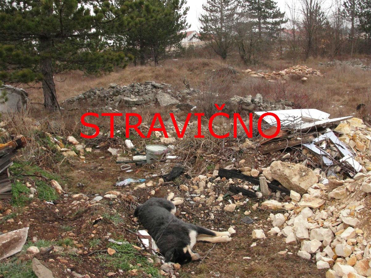 Uginuli pas bačen u neposrednoj blizini kuća