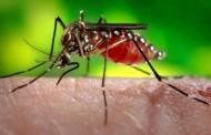 WHO ZABRINUT: Zika virus nezaustavljivo se širi, uzrokuje trajna oštećenja sluha i vida!