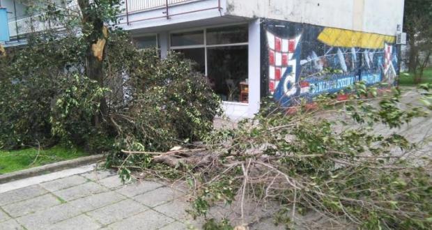 NEVRIJEME POGODILO HERCEGOVINU: Vjetar lomio drveće, skidao crijepove sa kuća…