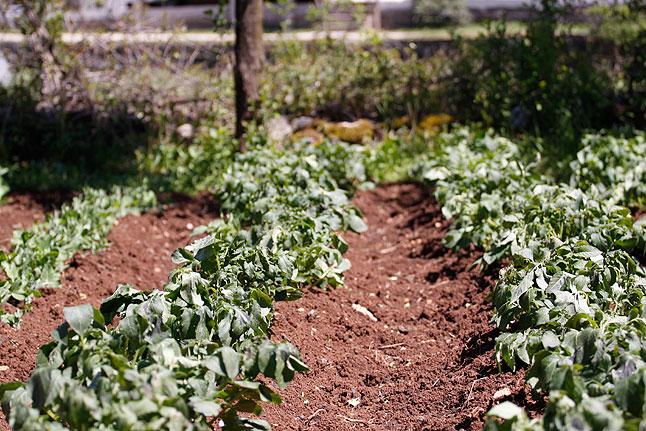mraz-biljke-0426116