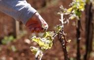 Mraz dobro naštetio poljoprivrednicima u Županiji Zapadnohercegovačkoj