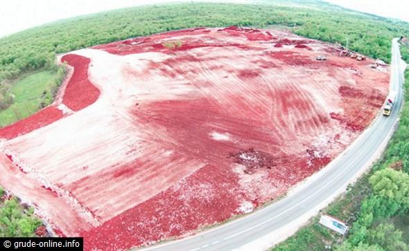 Na ovu parcelu bit će posađeno oko 200 000 sadnica smilja