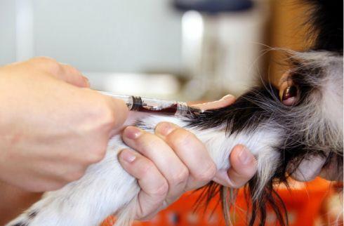 Obavijest o dijagnostičkom ispitivanju životinja