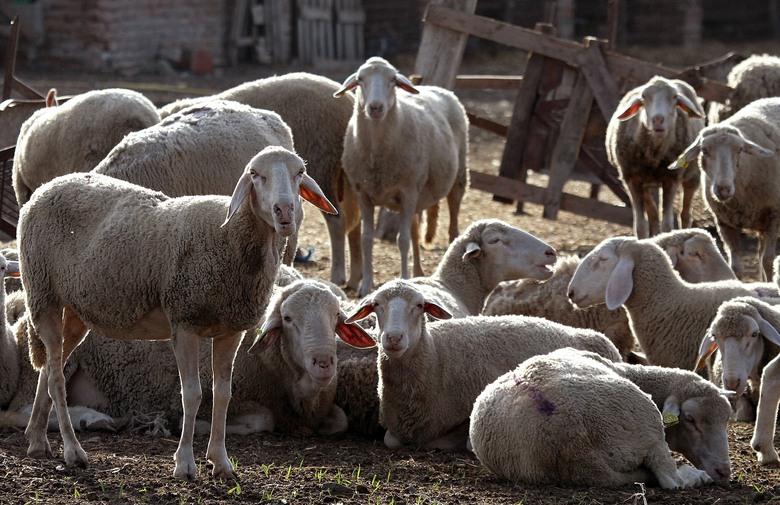 ZHŽ: Vlasnicima koji ne ispitaju životinje na brucelozu kazna i do 87.000 maraka