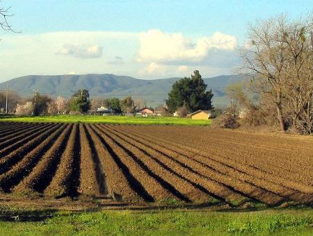 Prilagođeni SSP na snazi od 1. veljače: Što mogu očekivati poljoprivrednici