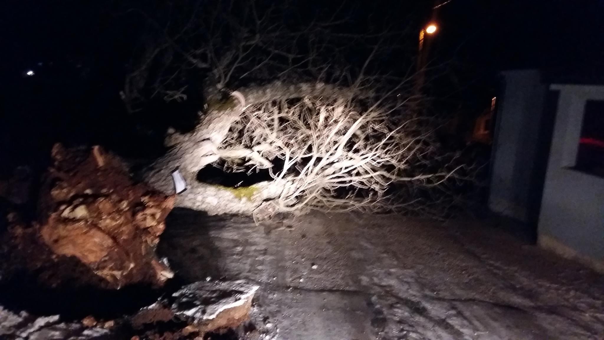 POSUŠJE: Bura prevrnula stablo u Donjim Jukićima