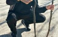 Berači kuka i šetači u opasnosti, u Grudama ubijene dvije zmije otrovnice