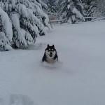 19042017-blidinje-snijeg10