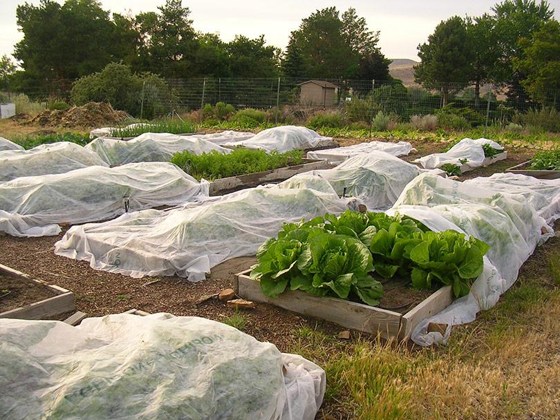 Kako zaštititi povrće od hladnoće