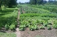 Donosimo nekoliko kratkih savjeta za vrtlarenje u travnju