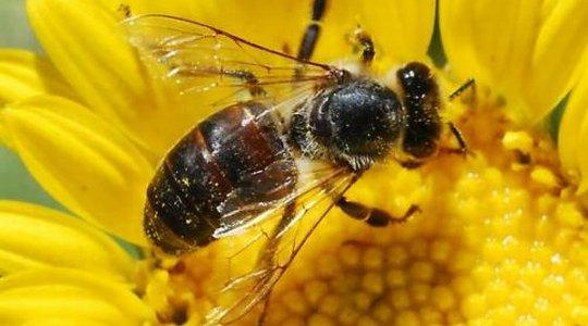 GRANTOVI: Poboljšanje konkurentnosti u sektoru pčelarstva