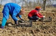 Više od polovine zemljišta neobrađeno u BiH, ministarstva će ga davati u zakup