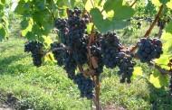 Predavanje o mogućnostima uzgoja vinove loze u općini Posušje