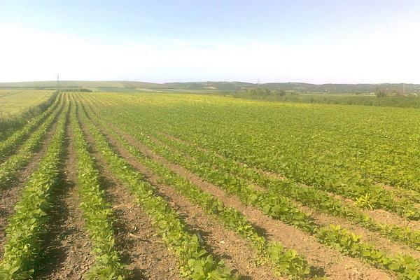 ZHŽ: U tijeku su prijave plana poljoprivredne proizvodnje