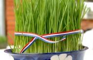 Znate li zašto sijemo pšenicu baš danas na svetu Luciju?