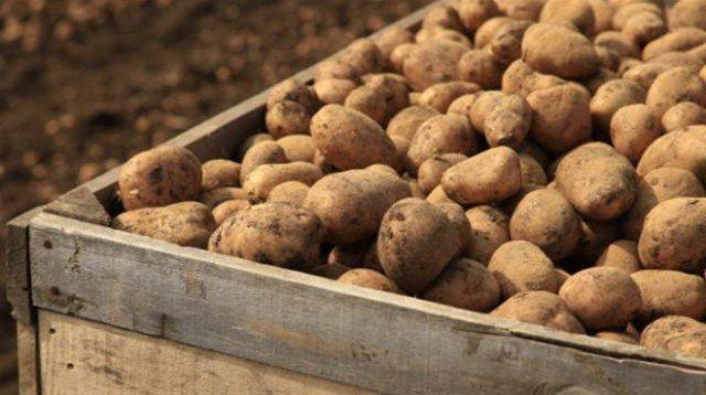 Ranom krumpiru iz Hercegovine egipatski i francuski ne mogu parirati