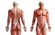 Više od pola našeg tijela nije ljudsko: Ljudske stanice čine samo 43 posto čovjeka