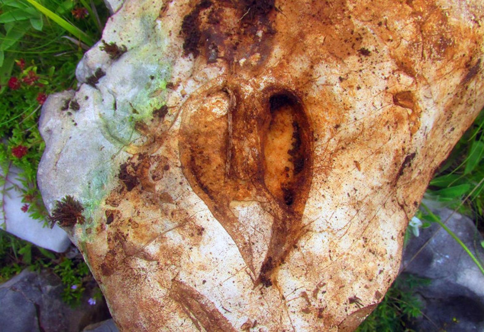 Na Blidinju pronašao ostatke srcolikih školjki, starih 220 milijuna godina