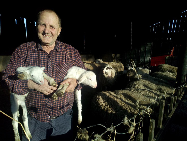 Od ovčarstva zaradi 5000 KM, jedno janje donese više novca od mjesečne mirovine