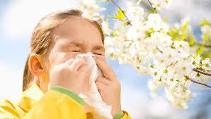 Alergičnih u proljeće sve više, ublažite simptome uzimanjem ljekovitih biljaka