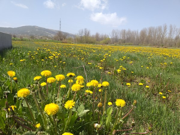 RAKITNO: Proljetna šetnja kroz rajske ljepote