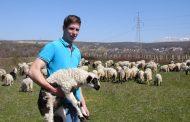 Jakovu su tek 24, a ima čak 200 ovaca, pet krava, vinograd od 3000 trsova i živi od svoga rada