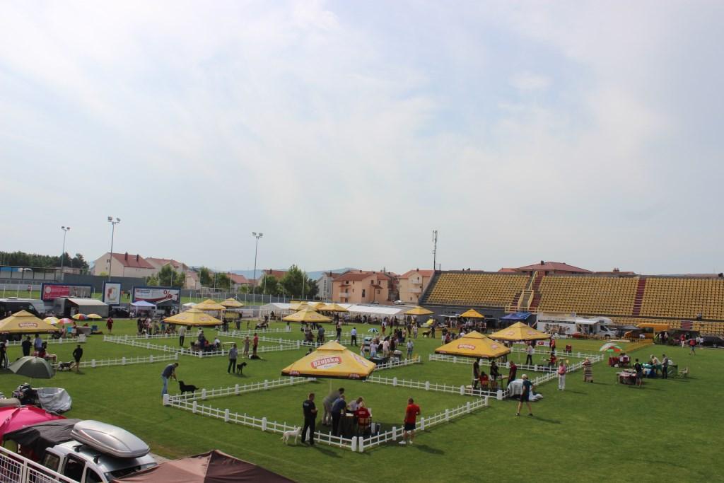FOTO: Otvorena najveća izložba pasa u BiH!
