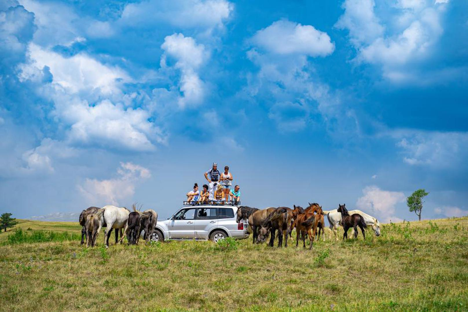 LIVNO: Prkose zvijerima i krivolovcima: Posljednje veliko krdo divljih konja u Europi
