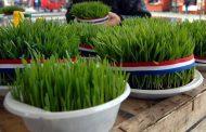 Danas je blagdan svete Lucije: Znate li zašto sijemo pšenicu?