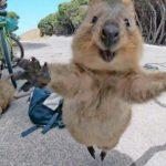Upoznajte najsretniju životinju na svijetu – preslatku kuoku