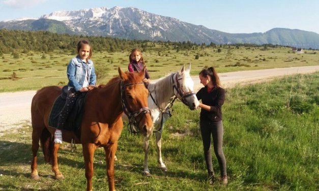 Divlji konji iz Livna i Kupresa u posuškoj Lekinoj Dragi