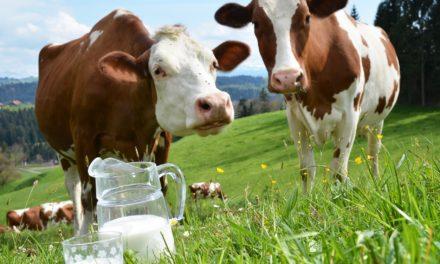 Poziv zainteresiranim proizvođačima mlijeka iz Općine Posušje na predavanje na temu ISHRANA MUZNIH GRLA