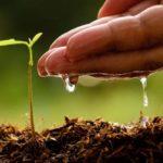 """Program utroška sredstava """"Tekući prijenosi za poticaje u poljoprivrednoj proizvodnji i ruralnom razvitku"""" utvrđenih Proračunom Županije Zapadnohercegovačke za 2020. godinu"""