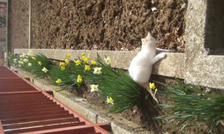ZANIMLJIVOSTI: I mala maca uživa u zimskoj idili