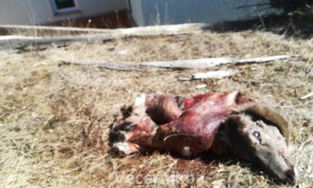 FOTO: Krivolovci siju strah i trepet na Blidinju