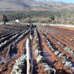 LJUBUŠKI: Županijska i gradska vlast pomoći će poljodjelcima