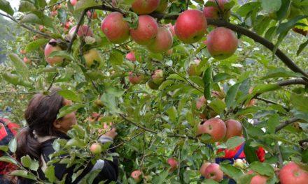 Zavod za poljoprivredu ŽZH: Obavite preventivnu zaštitu nasada jabuke i kruške
