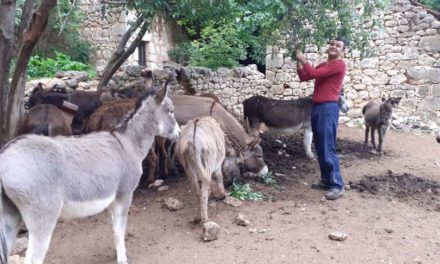 """Gruđanin ima 102 magarca, proizvodi mlijeko i razmišlja o """"magaraćem parku"""""""