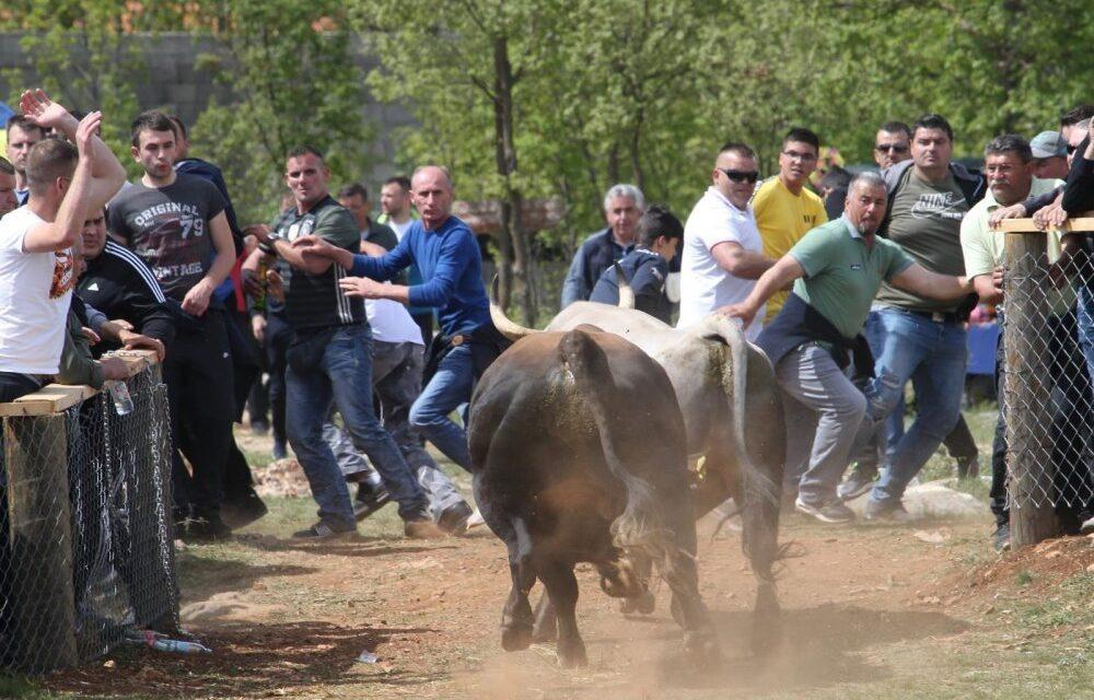 Dva bika uletjela u publiku za vrijeme bikijade u Dicmu, muškarac prebačen u bolnicu