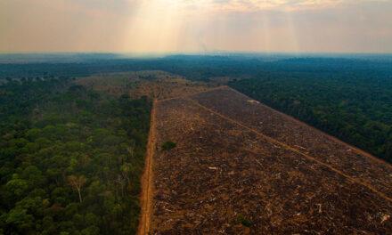 Izvan kontrole: Ubrzana deforestacija Amazonije