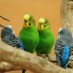 Papige 'sklonjene' iz parka jer su psovale posjetitelje
