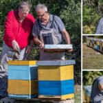 Hercegovački pčelari če pčelinji otrov prodavati u Europi, za kilu se dobije i 20.000 eura