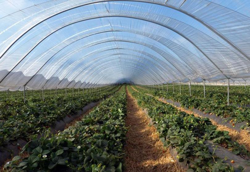 Vlada ŽZH uplatila 509.854, 71 KM za biljnu i plasteničku proizvodnju