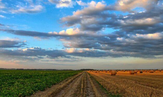 EU4AGRI: Javni poziv potencijalnim korisnicima bespovratnih sredstava za podršku investicijama u primarnu poljoprivrednu proizvodnju u BiH